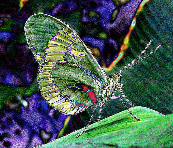 Nature Art Print featuring the photograph Butterfly Green by Janet Maloy