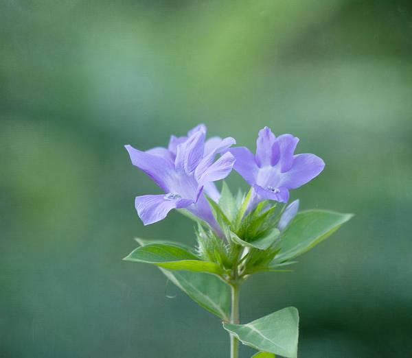 Purple Flower Art Print featuring the photograph Pretty In Purple by Kim Hojnacki