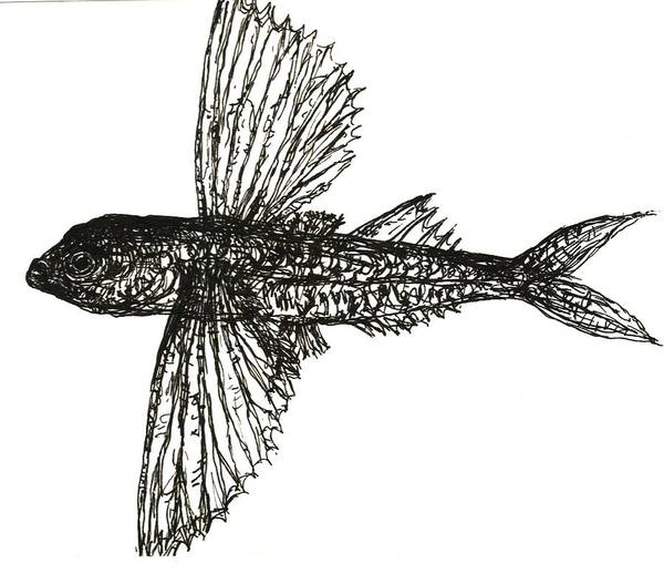 Fish Art Print featuring the drawing What The Flying Fish by Mianca Teifel