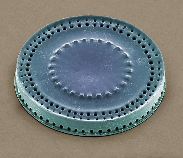 Paralia Sulcata Art Print featuring the photograph Diatom, Sem by Steve Gschmeissner