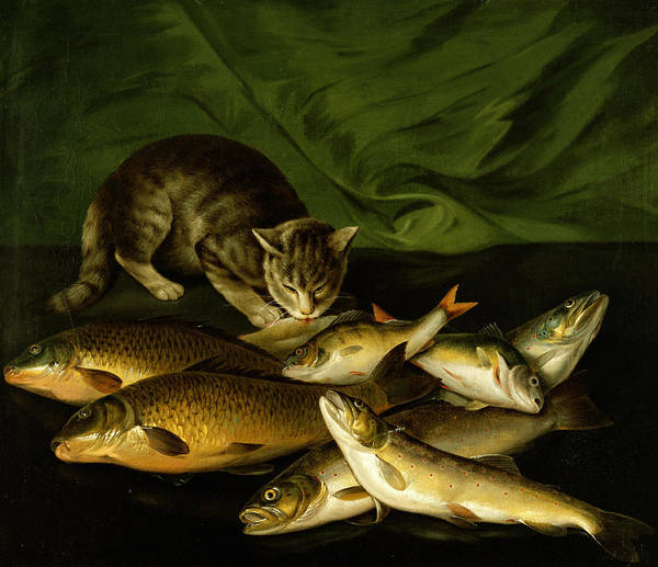 A Cat With Trout Art Print featuring the painting A Cat With Trout Perch And Carp On A Ledge by Stephen Elmer