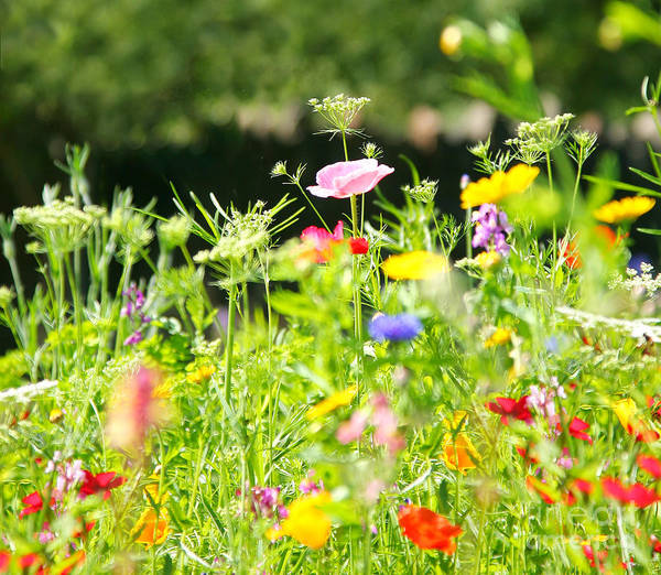 Flower Meadow Art Print featuring the photograph Flower Meadow by Susan Wall