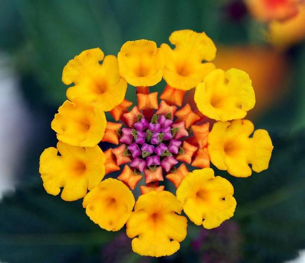Flower Art Print featuring the photograph Nature's Designs by April Wietrecki Green