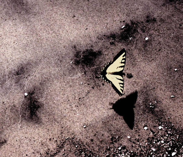 Landscape Art Print featuring the photograph Butterfly And Sand Wc by Lyle Crump
