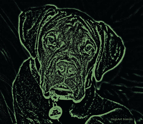 Boxer Art Print featuring the digital art A Positive Negative by DigiArt Diaries by Vicky B Fuller