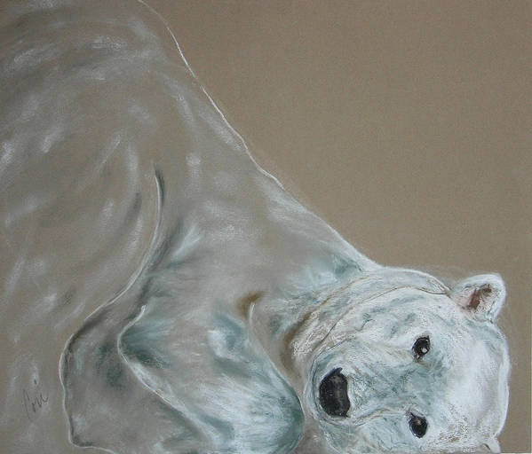 Polar Bear Art Print featuring the drawing Arctic Frolic by Cori Solomon