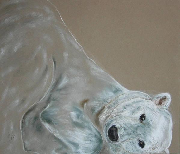 Polar Bear Art Print featuring the drawing Arctic Frolic by Cori Solomon