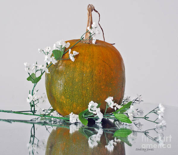 Photography Art Print featuring the photograph Harvest by Shelley Jones