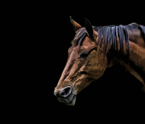 Horse Art Print featuring the photograph Horsing Around by Gary Smith