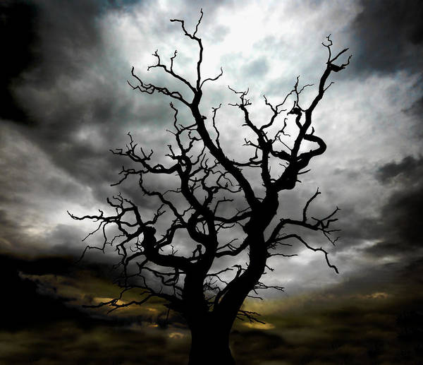 Tree Art Print featuring the photograph Skeletal Tree by Meirion Matthias