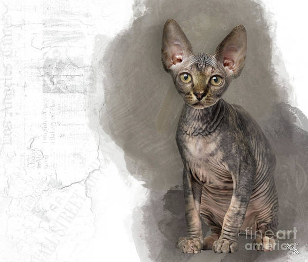 That Adorable Sphynx Kitten Looking At You Art Print
