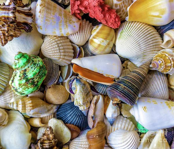 1550b Art Print featuring the photograph Tropical Beach Seashell Treasures 1550b by Ricardos Creations