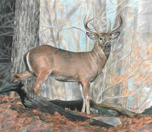 Deer Art Print featuring the drawing Whitetail Buck by Carla Kurt