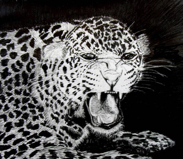Original Drawing Art Print featuring the drawing Jaquar II by Stan Hamilton