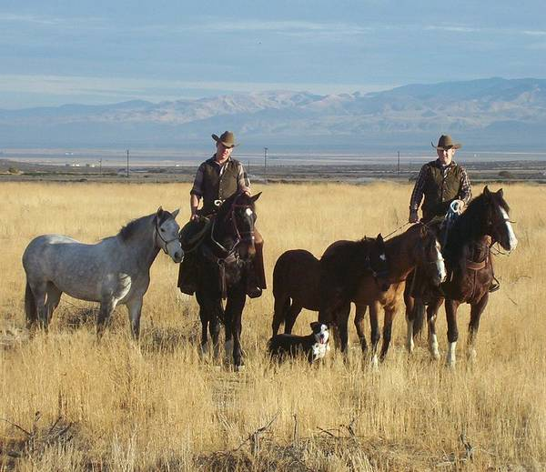 Western Art Print featuring the photograph Mustang 'n' Cowboys by Janey Loree