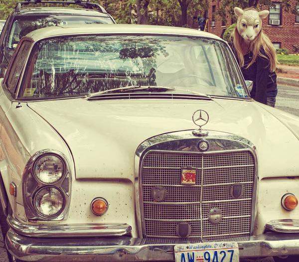 Lkg Photography Art Print featuring the photograph The Mercedes Sheep by Laura George