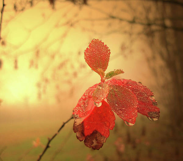 Autumn Art Print featuring the photograph Autumn Fog by Alex Lim