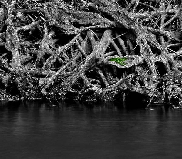 Tree Art Print featuring the photograph Natural Weaves by Mark Fuller