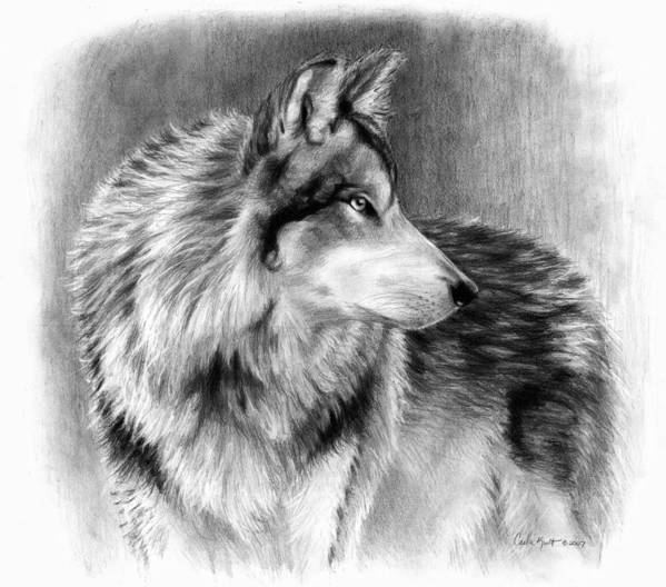Wolf Art Print featuring the drawing Cautious Eyes by Carla Kurt