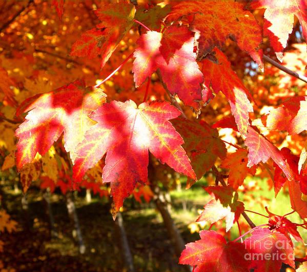 Autumn Art Print featuring the photograph Autumn Shadows by Tisha Clinkenbeard