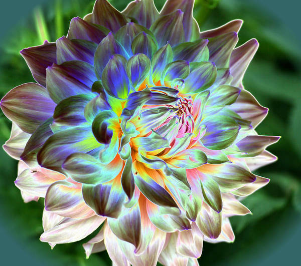 Dahlia Art Print featuring the photograph Eerily Beauty by Christiane Schulze Art And Photography