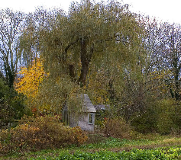 New England Art Print featuring the photograph Farm Shed by David DeCenzo