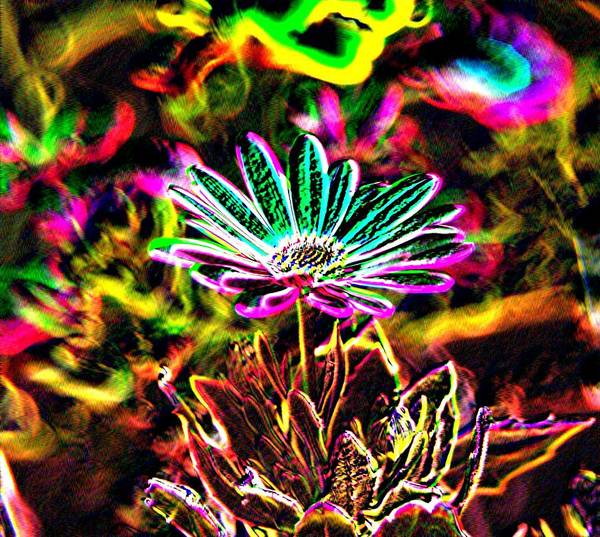 Art Print featuring the photograph Glowing Flower by Jeff Swan