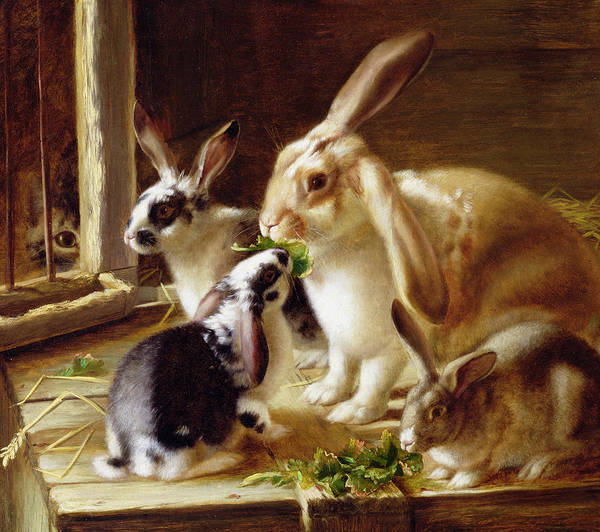 Eating Art Print featuring the painting Long-eared Rabbits In A Cage Watched By A Cat by Horatio Henry Couldery
