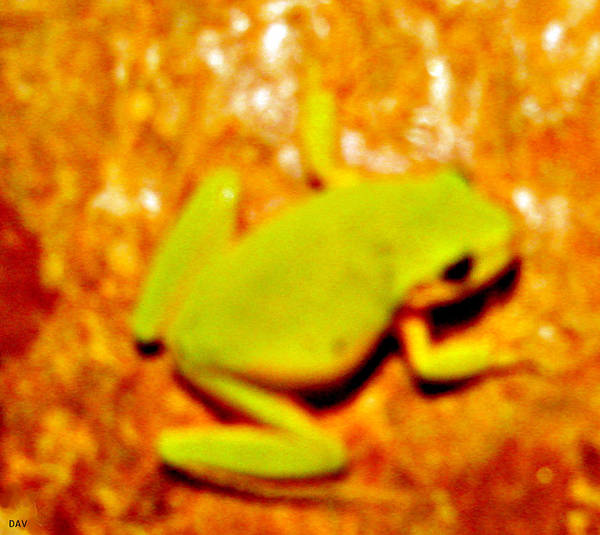 Frog On The Wall Art Print featuring the photograph Frog On The Wall by Debra   Vatalaro