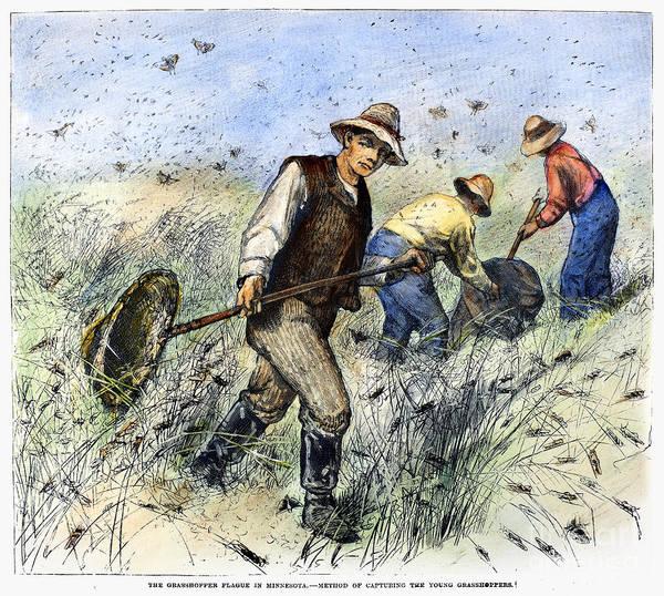 1888 Art Print featuring the photograph Grasshopper Plague, 1888 by Granger