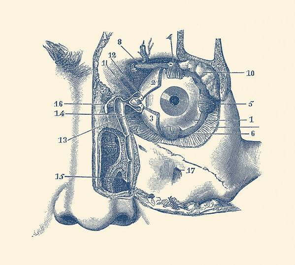 Human Eye And Tear Duct Diagram Vintage Anatomy Art Print By