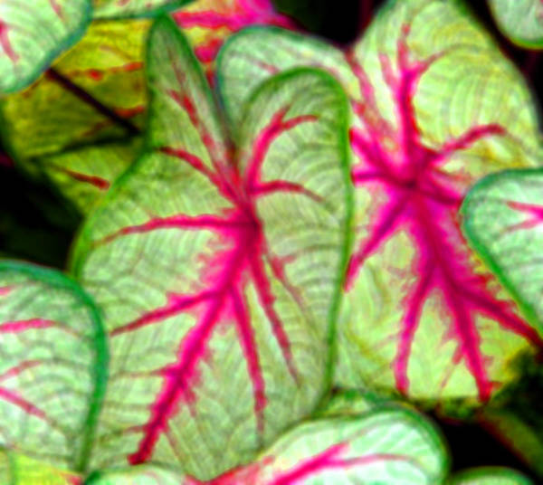 Leaves Art Print featuring the digital art Oh Didgital Is It by John Toxey