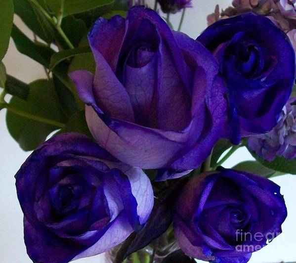 Photograph Art Print featuring the photograph Purple Roses Ll by Marsha Heiken