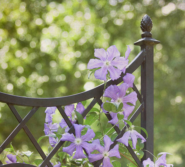 Purple Flower Art Print featuring the photograph On The Fence by Kim Hojnacki