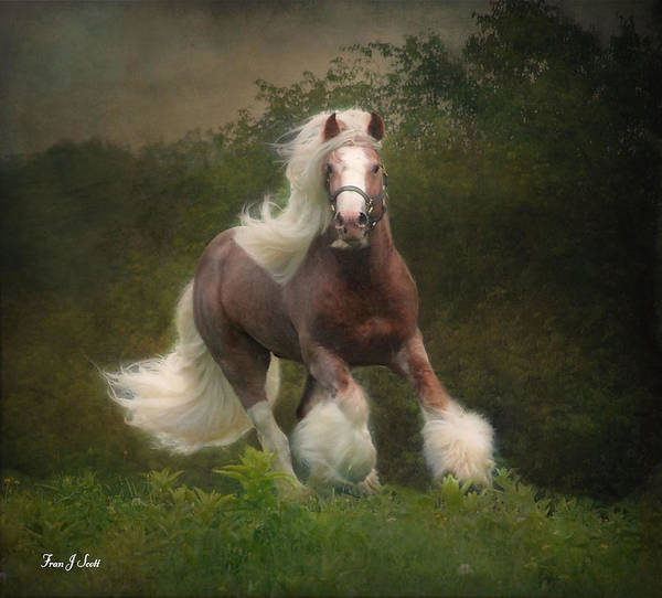 Horses Art Print featuring the photograph Simon And The Storm by Fran J Scott