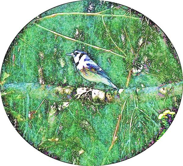 Bluejay Art Print featuring the photograph Blue Jay 8 by Dave Dresser