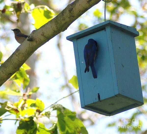 Animals Art Print featuring the photograph Bluebird Hanging Around by Barry Kadische