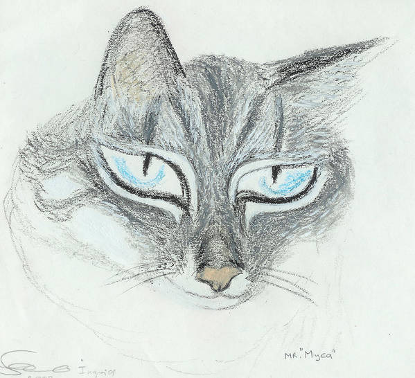 Cat Art Print featuring the drawing All Eyes by Ingrid Szabo