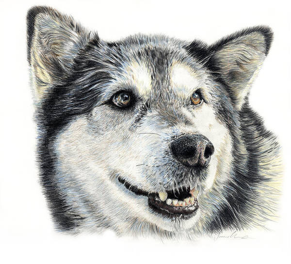 Husky Art Print featuring the drawing Aztec by Joanne Stevens