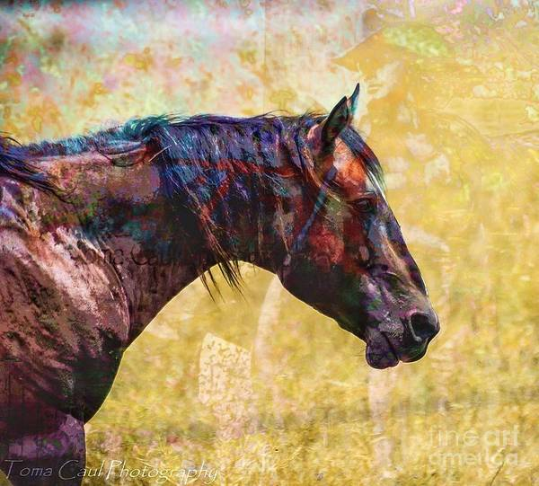 Horse Art Print featuring the photograph Cowgirl Dreamin by Toma Caul