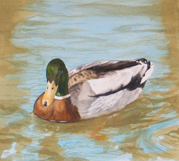 Duck Mallard Water Art Print featuring the painting Mallard Drake by Diane Ziemski