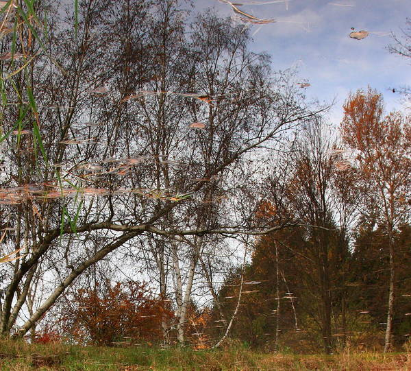 Nature Art Print featuring the photograph Rheinstrom Trees With A Twist by Larry Federman