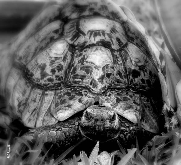 Tortalicious Art Print featuring the photograph Tortalicious by Ed Smith