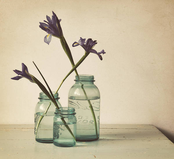 Iris Art Print featuring the photograph A Little Bit Country by Amy Weiss