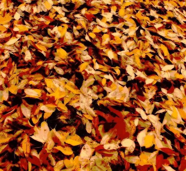 Leaf Art Print featuring the digital art Fallen Leaves by Tg Devore