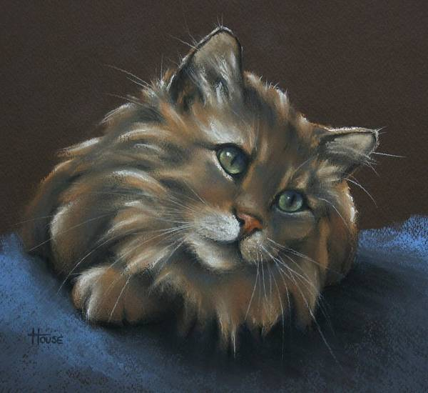 Tabbycat Print featuring the drawing Miko by Cynthia House