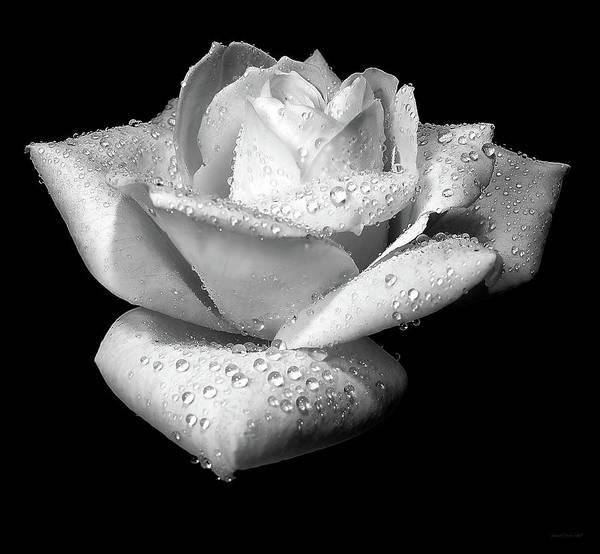 Rose Art Print featuring the photograph Platinum Rose Flower by Jennie Marie Schell