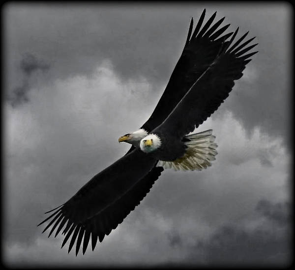 Birds Art Print featuring the photograph Under The Double Eagle by Leslie Reagan - Joy To The Wild Photos