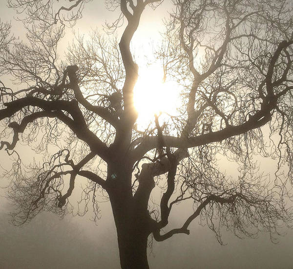 Tree Art Print featuring the photograph Fog by Danielle Cirillo