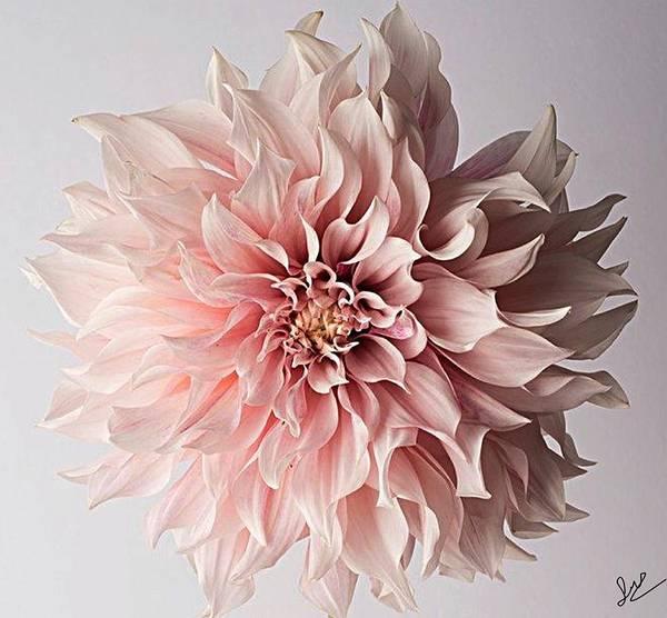 Flower Pink Elegant Breathtaking Art Print featuring the photograph Floral Elegance by Sarah Waldman